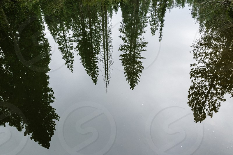 green trees reflected in water photo