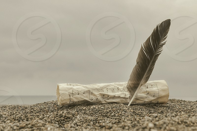 black feather beside paper on sand photo