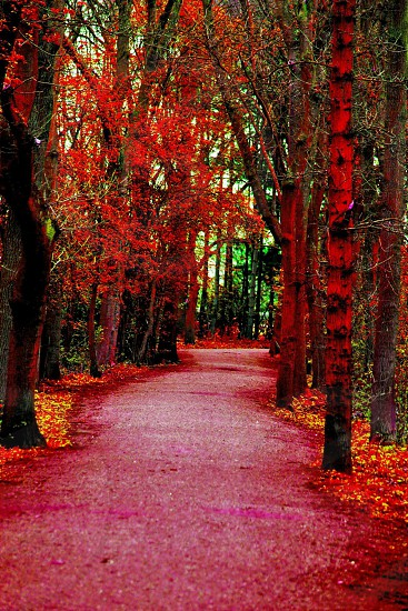 An edited photo of an Elvaston Castle pathway red soft light brushed over the trees. photo
