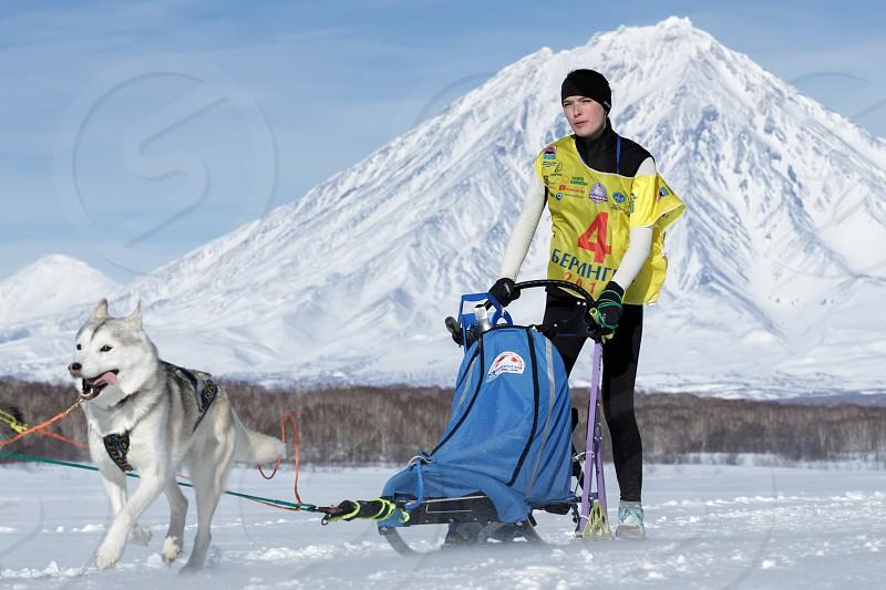 PETROPAVLOVSK KAMCHATKA PENINSULA RUSSIA - FEB 25 2017: Running sled dog team Kamchatka musher Julia Chiruhina. Russian Cup of Sled Dog Racing (snow disciplines) Kamchatka Sled Dog Racing Beringia photo