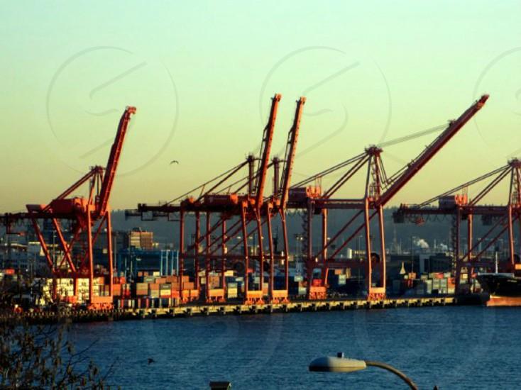 Puget Sound cranes in Seattle WA photo