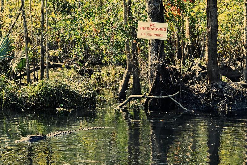 Cajun Pride New Orleans Alligator Swamp photo