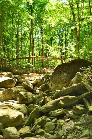 Creek ran dry photo