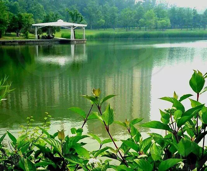 laketrees photo