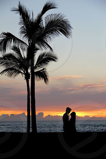man and woman standing near coconut palm tree photo