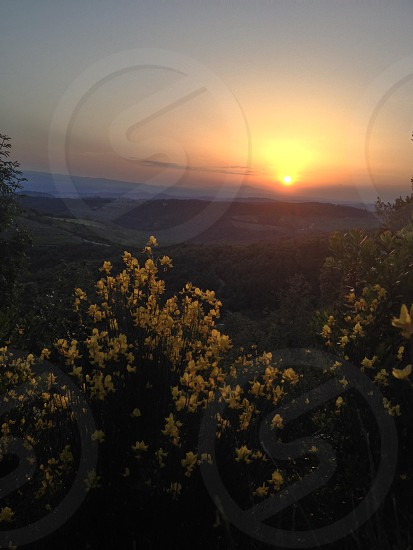 sunset across green trees and yellow flowers photo