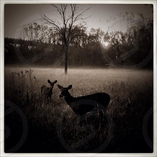 two deer on field  photo