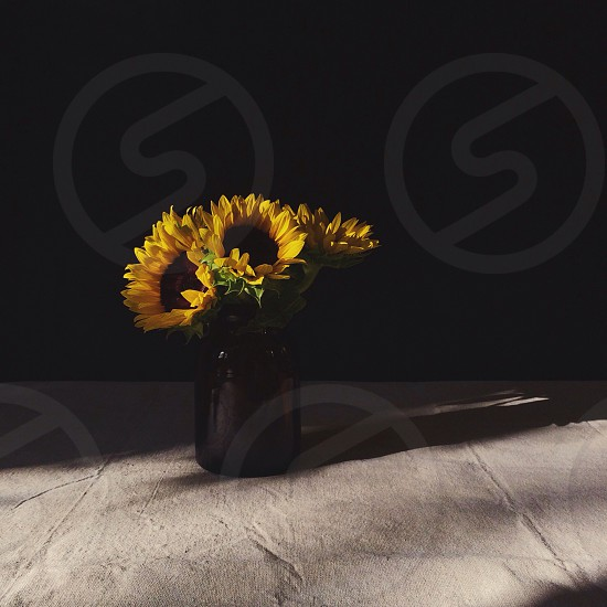 sunflowers on glass jar photo