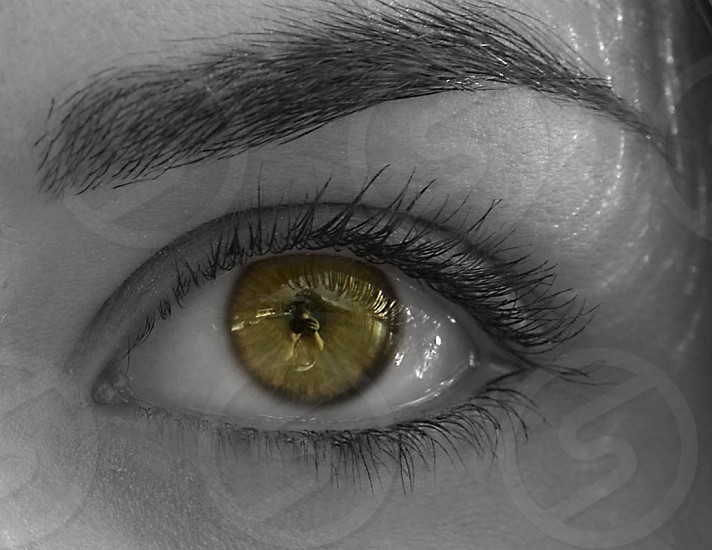 Reflection of photographer in the eye. photo