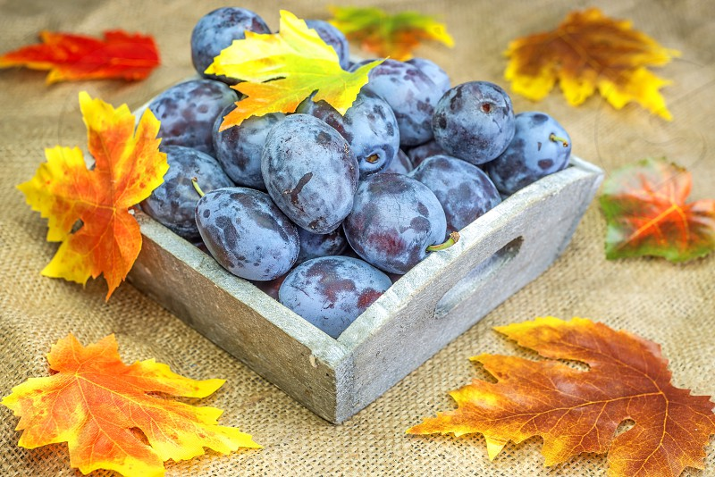 Plums with autumnal painted leaves photo