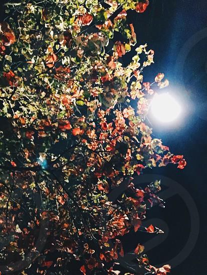 Fall at night  photo