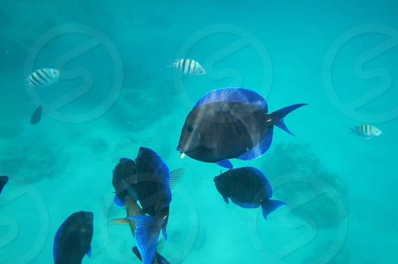 school of blue and black pet fish photo