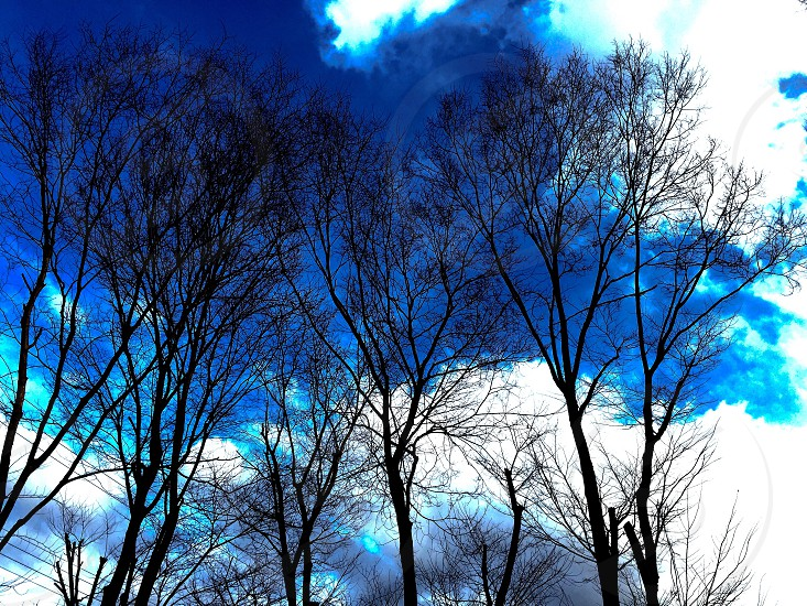 silhouette of withered trees photo