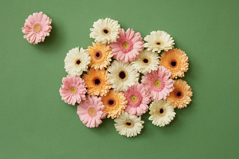 Composition from fresh different gerberas on paper green background. Mother's Day March 8. Spring concept. Flat lay photo