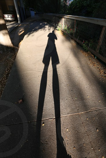 Shadow down the path photo