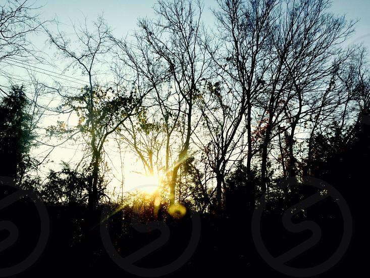 bare trees under sunlight photo