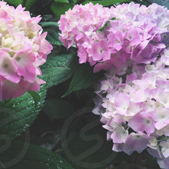 purple and white flowers photo
