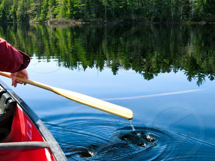 Park activity paddling canoe red lake landscape trees green water blue reflections paddle man's arm waterdrops swirls spring photo