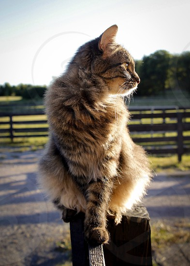 Cat on a fence barn cat on farm fence cat at sunset  photo