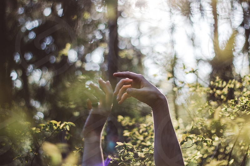 Human hands in nature forest photo