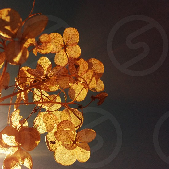 yellow leaves on tree photo