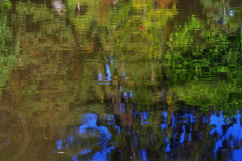 Lotusland abstract reflection  photo
