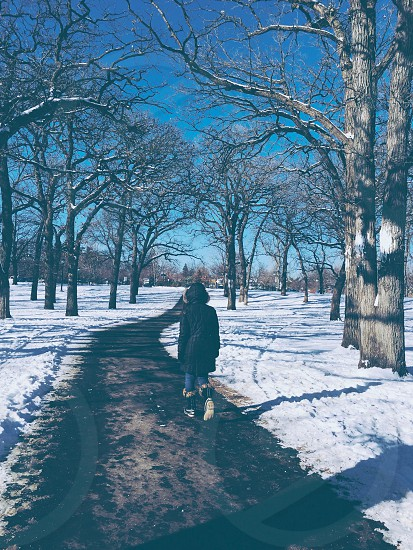 Cold trees winter girl walking snow photo