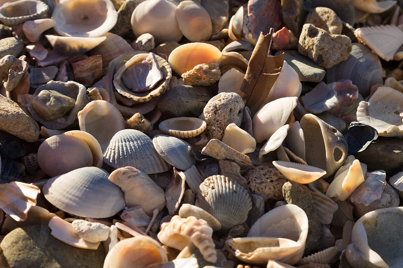 Shells seashells shoreline beachside beachfront ocean shells seashore Seawall sunlight shapes Burleigh beach texture Australia sizes multiple numerous sea shells beach shells  photo