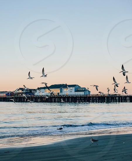 warf santa barbara ocean sea coast pier sunrise sunset california birds flock pelican beach sandpiper sky summer photo