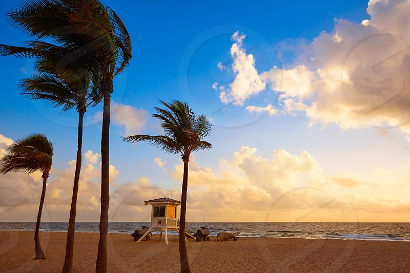 Fort Lauderdale beach morning sunrise in Florida USA palm trees photo