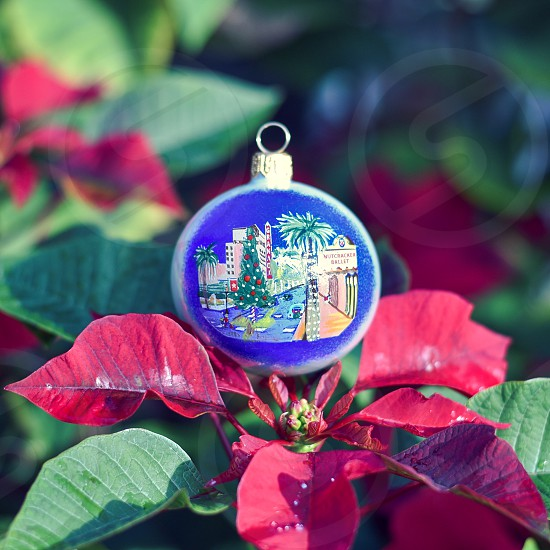 christmas ornament santa barbara holly photo