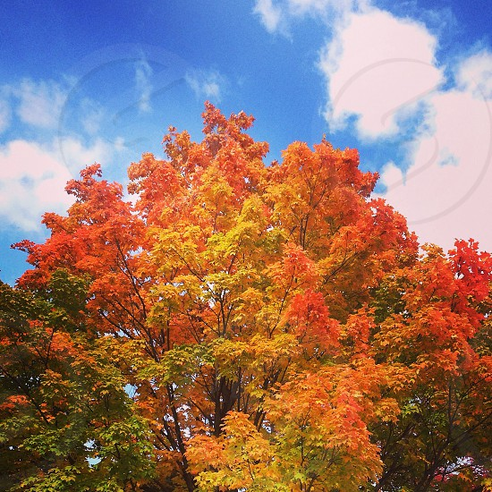 Autumn fall Midwest orange clouds blue sky colors photo