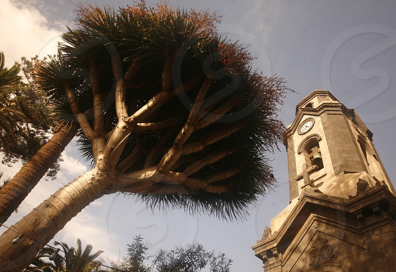 The Iglesia San Francisco of  Puerto de la Cruz on the Island of Tenerife on the Islands of Canary Islands of Spain in the Atlantic.   photo