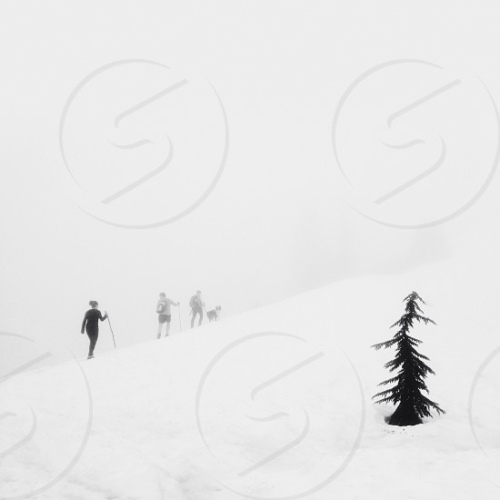 tree people walking in the snow photo
