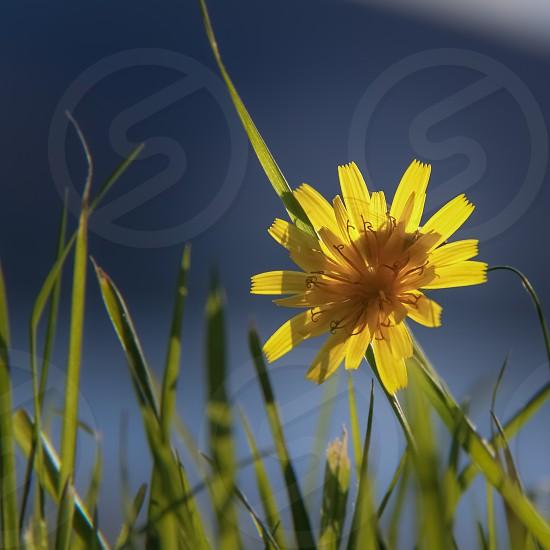 Yellow flower macro photo