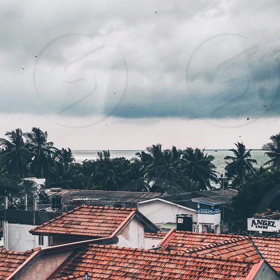 srilanka Indian Ocean ocean palms landscape nature travel traveler Шри-Ланка Индийский океанпальмы крыши photo