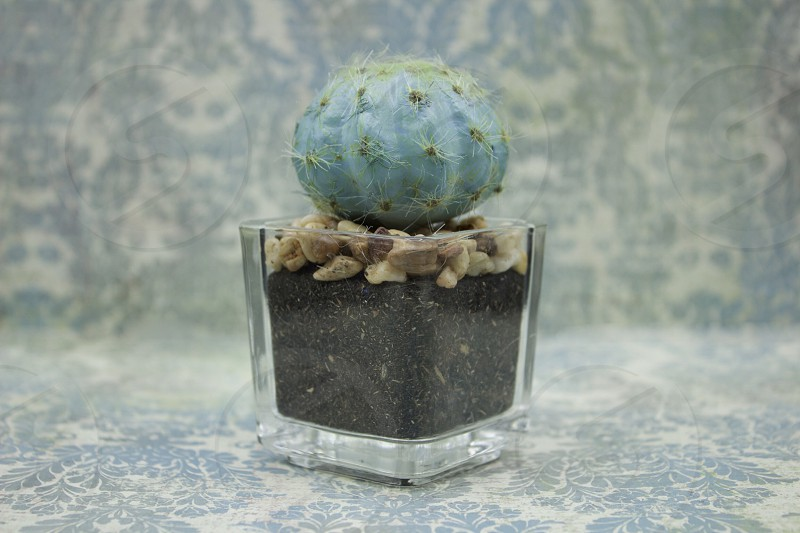 Small turquoise-colored cactus in a clear glass container against a light turquoise-patterned background photo