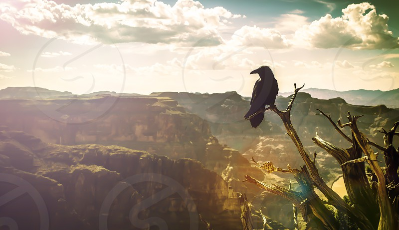 Raven Grand Canyon Landscape Adventure photo