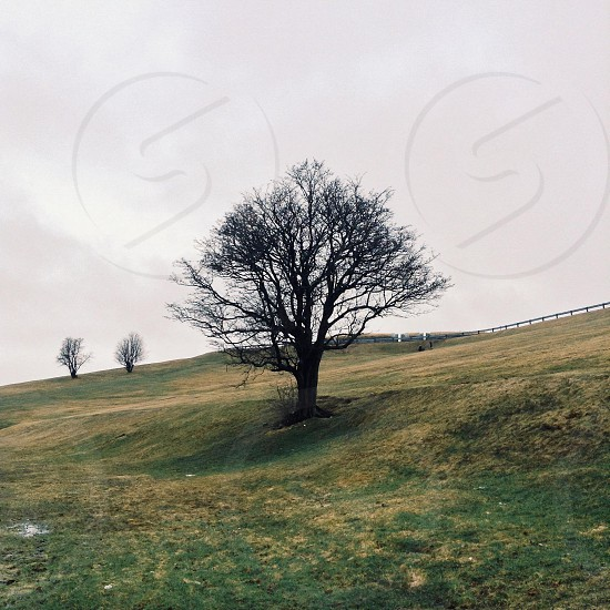 leafless tree on a rolling hill photo