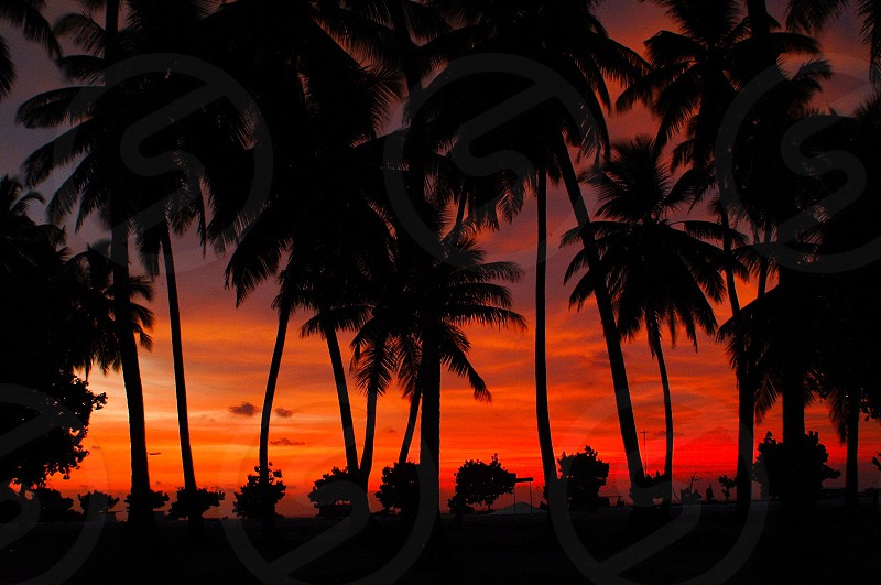 sunset view with coconut trees photo