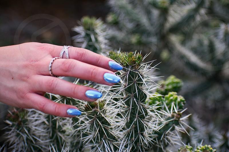 Girl with nail polish touching cactus plant photo
