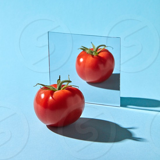 Organic juicy tomato with reflection in the mirror presented on a blue background with space for text. Healthy vegetable photo