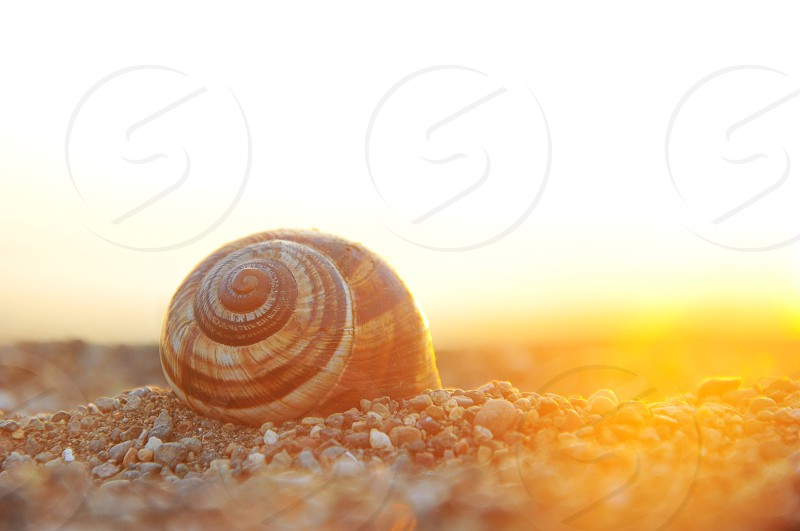 brown and white snail on rocky field under orange sunset photo