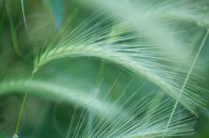 green plant macro photography photo