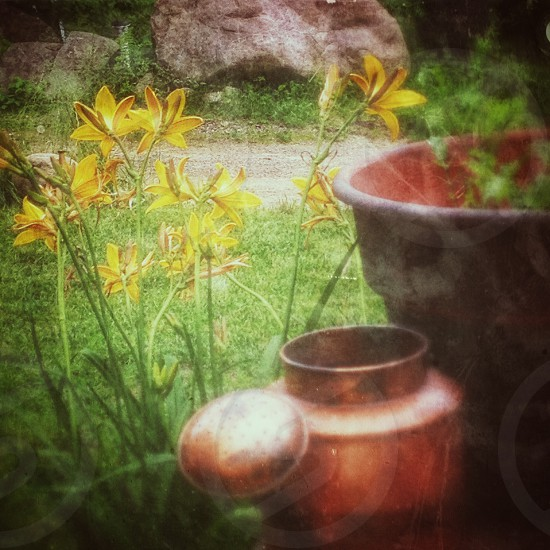 yellow flower near brown jar photography photo
