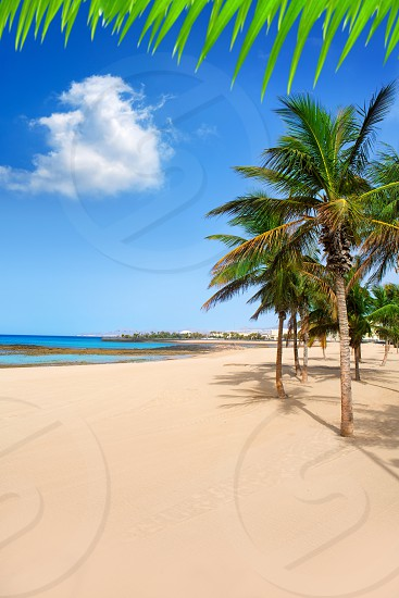 Arrecife Lanzarote Playa Reducto beach tropical palm trees at Canary Islands photo