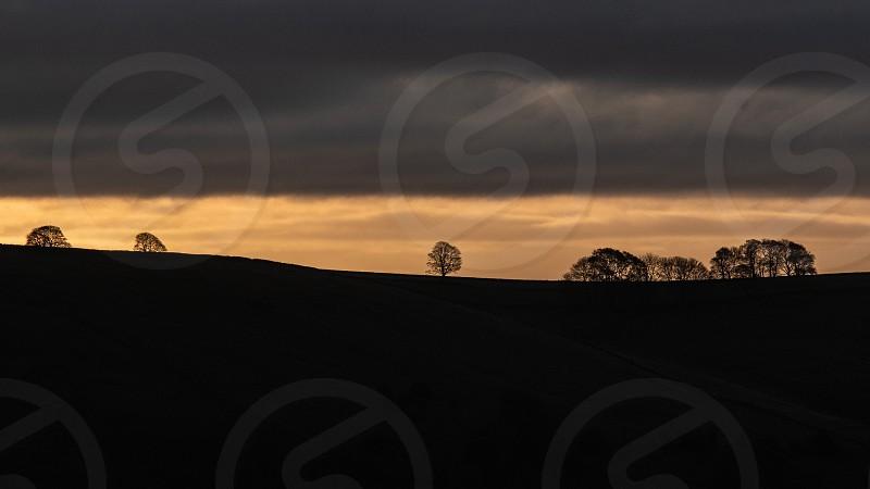 Trees on horizon at sunrise. photo