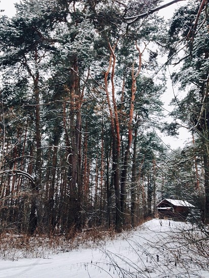 snow covered cabin in the woods during daytime photo