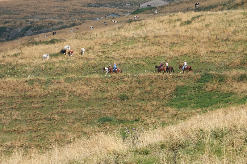 people riding on horses passing though green and brown grass field during daytime photo