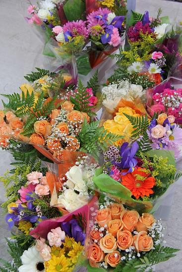 bundle of assorted-color petaled flowers photo